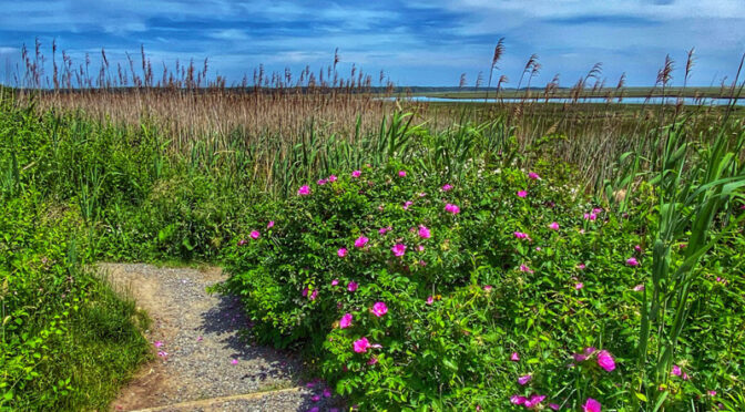 Fort Hill Trails On Cape Cod Are Just Gorgeous!