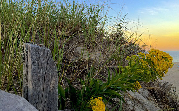 Almost Sunset At Nauset Beach On Cape Cod.
