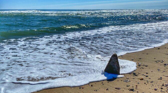 Is It A Shark At Coast Guard Beach On Cape Cod?