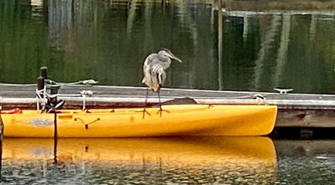 Kayak Fishing On Cape Cod.